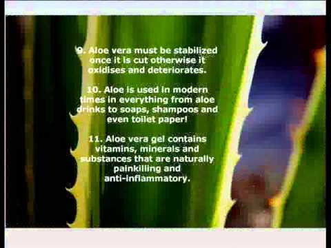 Aloe Vera Benefits and Facts. The Top 20! #AloeVeraBenefits