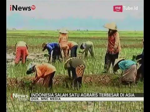 Sektor Pertanian Di Indonesia Yang Terbesar Namun Permasalahan