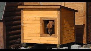 Домик для собаки Двухкомнатный №1 Цена в Санкт Петербурге 6 500  рублей