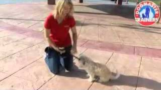 Just Right Dog Training Video 2