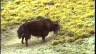 Серия фильмов о природе - Горы Палеарктики