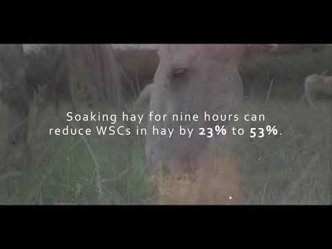 5 Reasons You Should Stop Soaking Your Horse's Hay