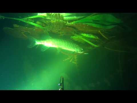 Подводная охота - ночь, щука и лещ