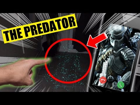 DO NOT FACETIME THE PREDATOR AT 3 AM!! (WE INJURED HIM!!)