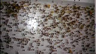 Ошибки Пчеловода. Пчеловодство Для Начинающих. Результат Повторной Обработки От Клеща.
