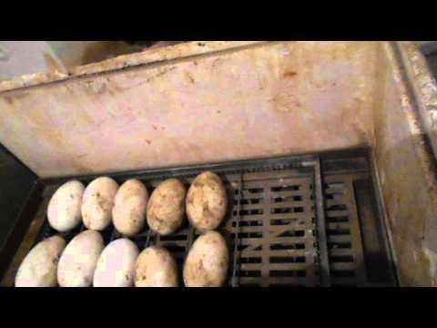 Видео Инкубатор гусиные яйца
