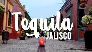 Un día en Tequila Jalisco Pueblo Mágico // Que hacer y Ver  en Tequila Jalisco // Solo Shiro