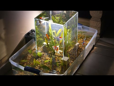 Building A Suspended Multi Level Aquarium INCREDIBLE