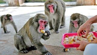厳しい暑さが続く中、福井市の足羽山公園遊園地(ミニ動物園)は12日...