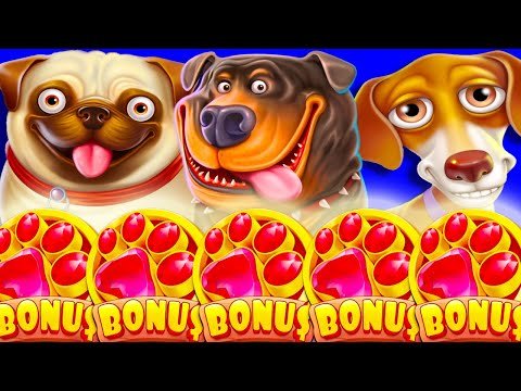5 SCATTERS 😱 THE DOG HOUSE MEGAWAYS 🐶 SLOT BONUS BUYS 15 STICKY WILD FREE SPINS‼️🔥