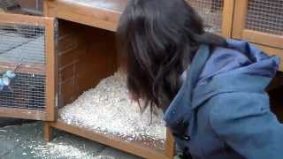 Updated Rabbit Hutch Cleaning