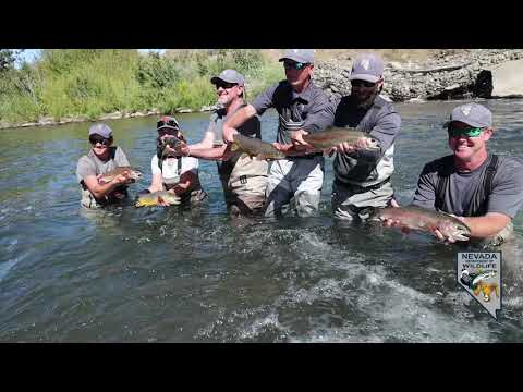 2019 Electrofishing In The Truckee River