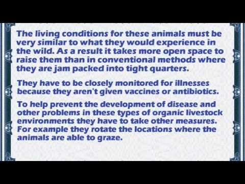 Beginners Guide To Raising Organic Livestock