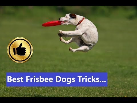 Awesome Frisbee Dogs Tricks | Ultimate Frisbee Disc Dog Breeds