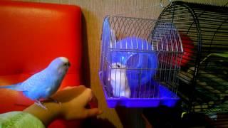 видео Видеоурок 1: Как достать попугая из шкафа