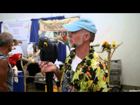 Bird Talk Television with the Hawaiian Feathered Friends Network