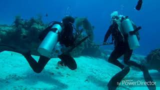 Scuba Diving Cozumel 2018, Reef Sharks, Lion Fish, Octopus and more
