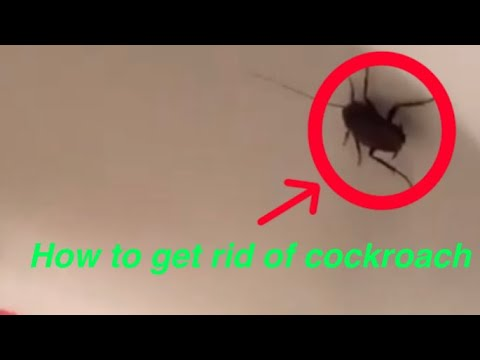 How To Get Rid Of A Cockroach In Your Bathroom (WHY DOES THIS HAVE SO MANY VIEWS)