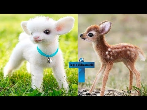 Top 10 Most Funny & Cute Baby Animal Videos | Adorable & Cutest Baby Animals