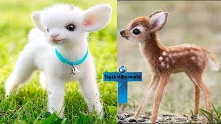 Top 10 Most Funny & Cute Baby Animal Videos   Adorable & Cutest Baby Animals