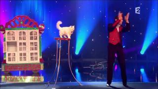 Circus Cats on Parade *AWESOME CAT TRICKS* 1080P