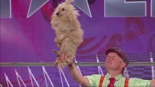 Podczas tego występu głównymi bohaterami były...psy :) [Mam Talent!]