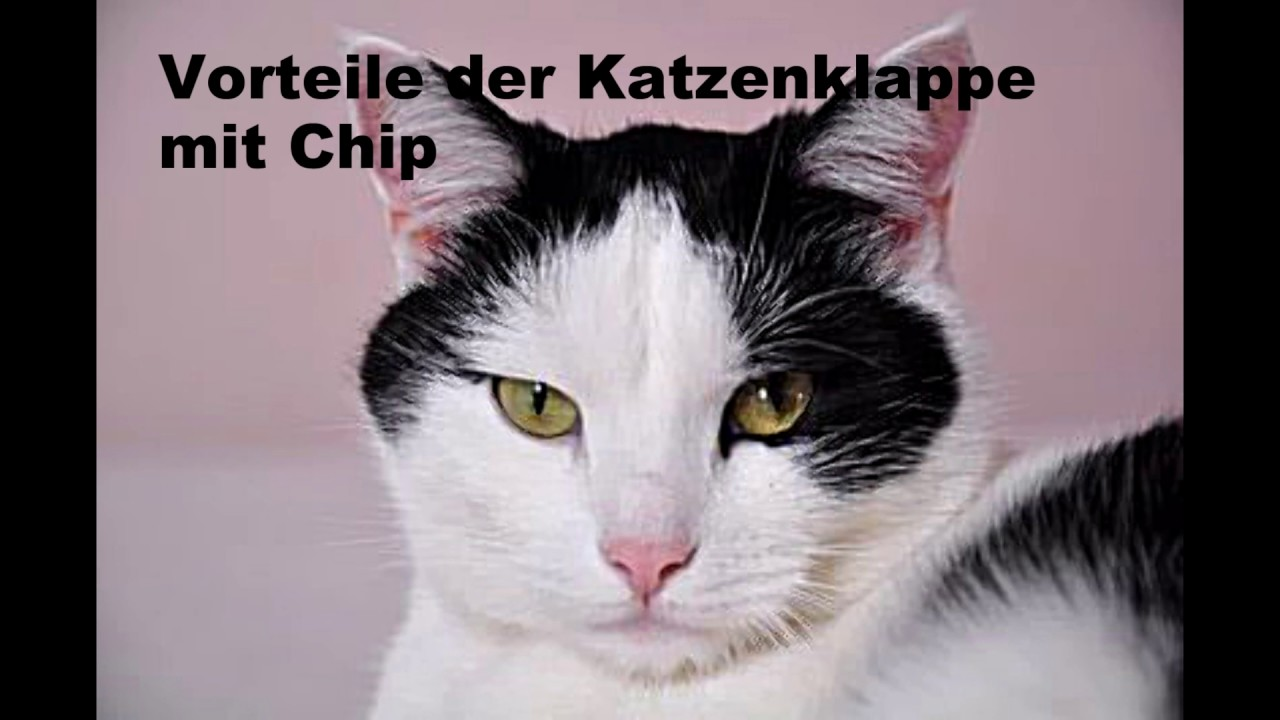 katzenklappe mit chip was bringt sie youtube. Black Bedroom Furniture Sets. Home Design Ideas