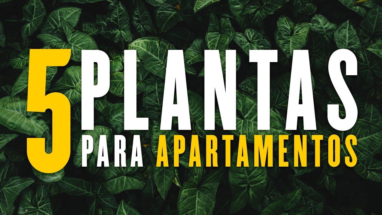 5 Plantas Para Apartamentos