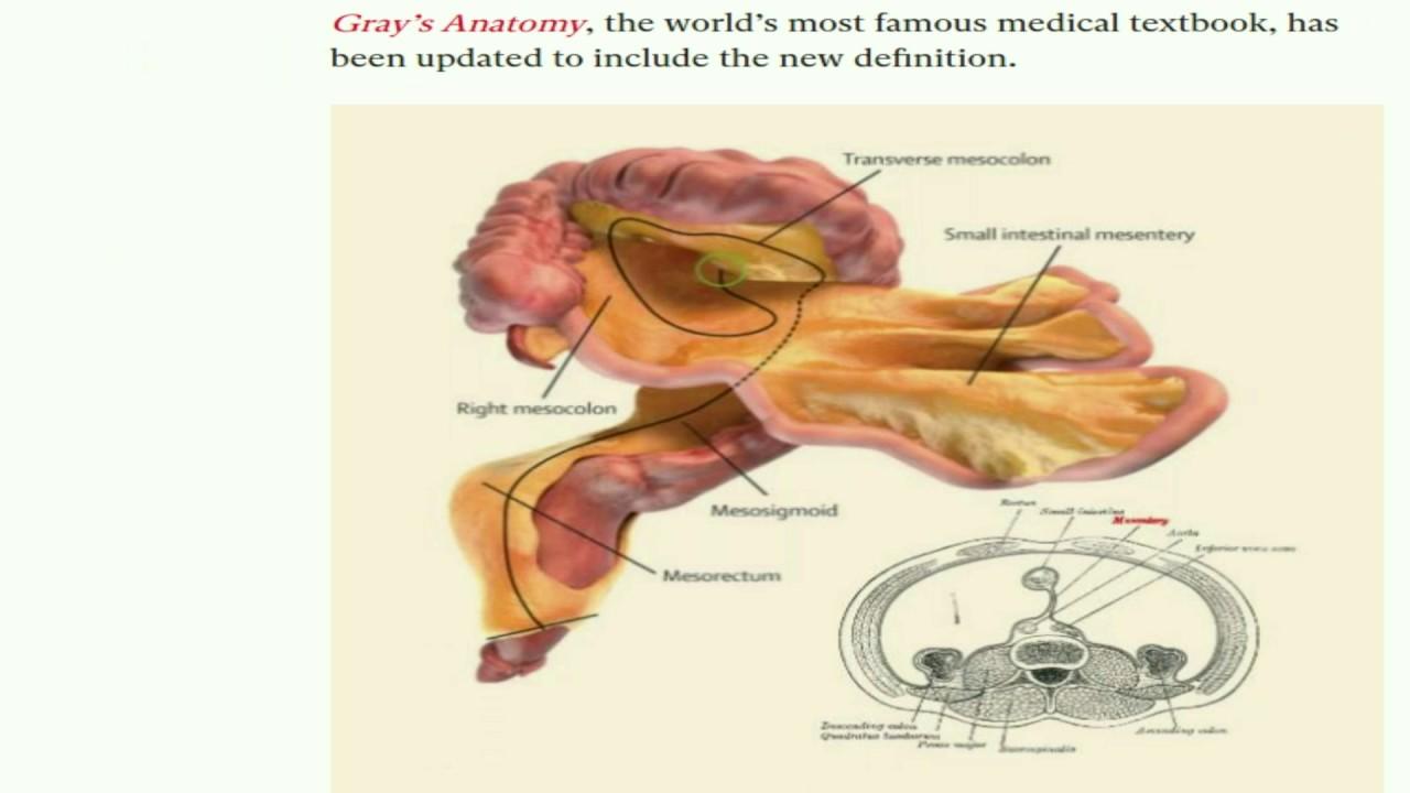 New Human Organ The Mesentary Youtube
