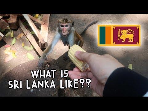WHAT IS SRI LANKA LIKE? - MONKEYS GALORE! | Vlog #96