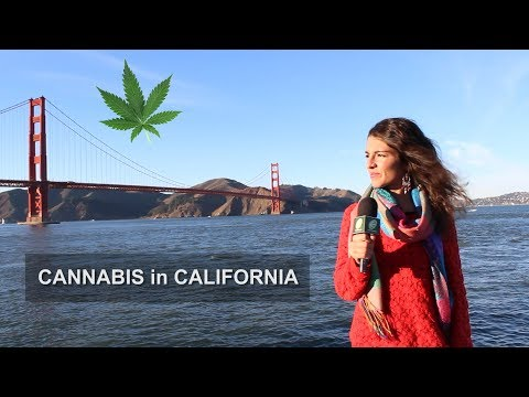 Avance Clara Sativa en CALIFORNIA. LEGALIZATION in CALIFORNIA. LEGAL CANNABIS made in USA!