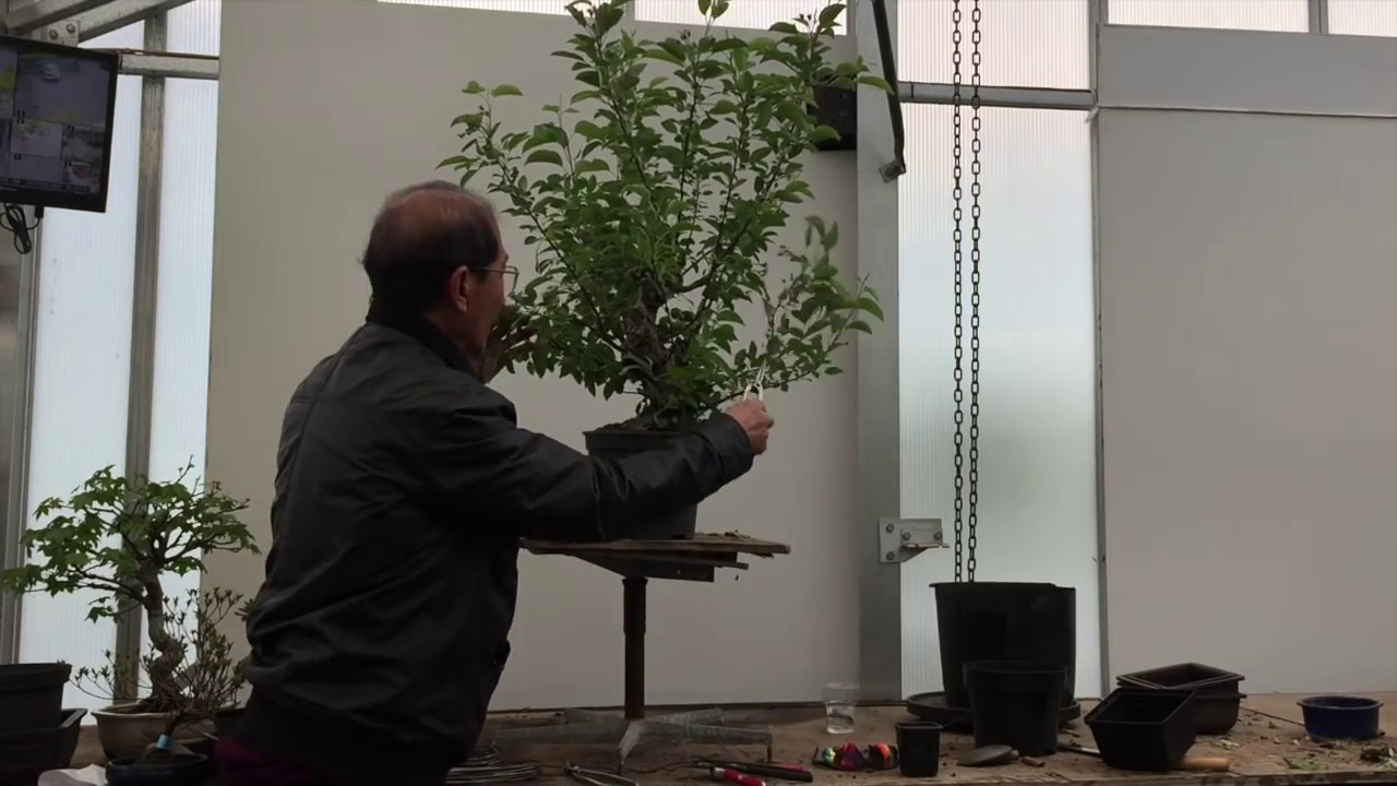 Creating Your Own Bonsai Tree | The Easy Guide By Peter Chan