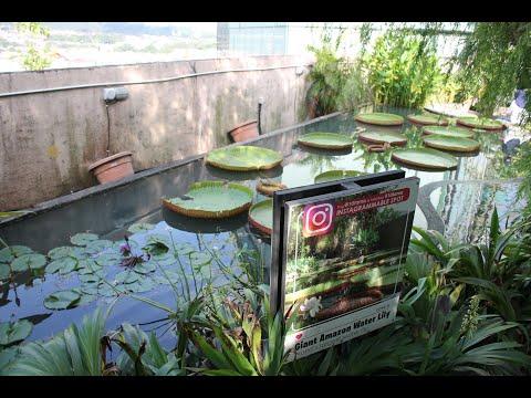 Secret Garden @1