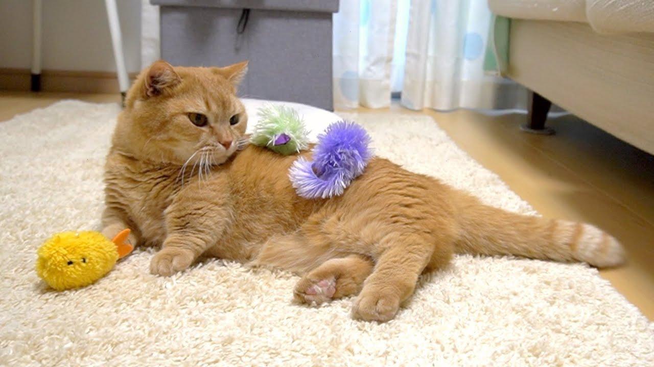 ママの絶妙なコントロールでおもちゃまみれにされて困惑する猫