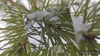 Природа моей,малой родины зима часть 4