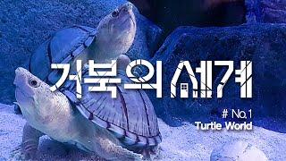 거북의 세계 #01 사랑을 나누는 도북이와 도순이 / …