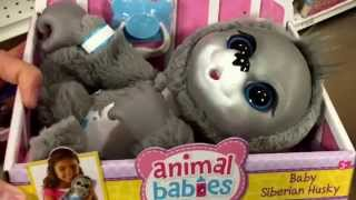"""Animal Babies Nursery """"baby Siberian Husky"""" Soft Baby Animal Doll With Pacifier / Toy Review"""