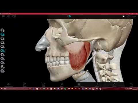 Descargar e Instalar Visible Body Atlas de Anatomia Humana en 3D en ...