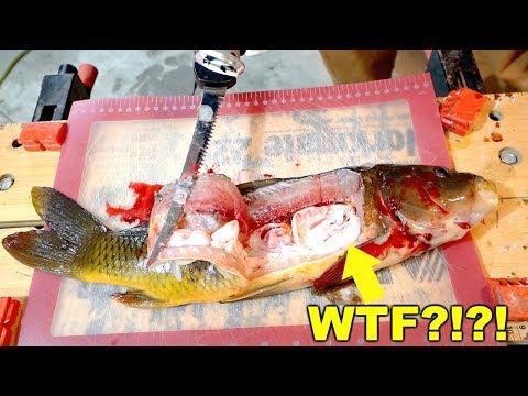 DISGUSTING Carp Catch N' Cook! IS IT EDIBLE???