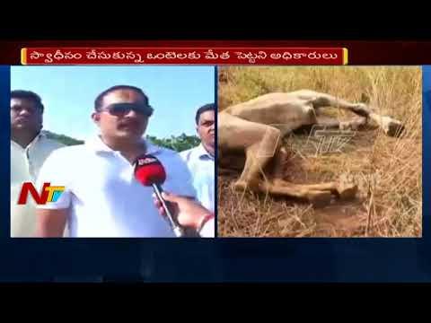 Download Youtube: ఒంటెల నరకయాతన    ఒంటెలకు తిండి పెట్టని అధికారులు    Live Updates