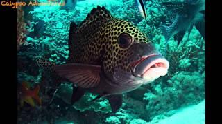 Tubbataha Reef 2014