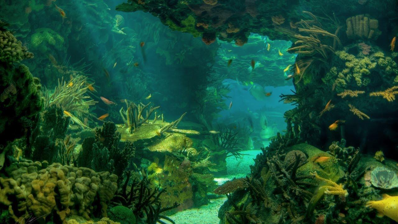 Ламинария - морская капуста. Какие полезные свойства? - YouTube