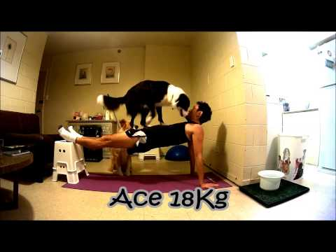Talented dogs help owner exercise