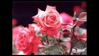 生命與愛的泉源-8-生命誠可貴,愛情價更高