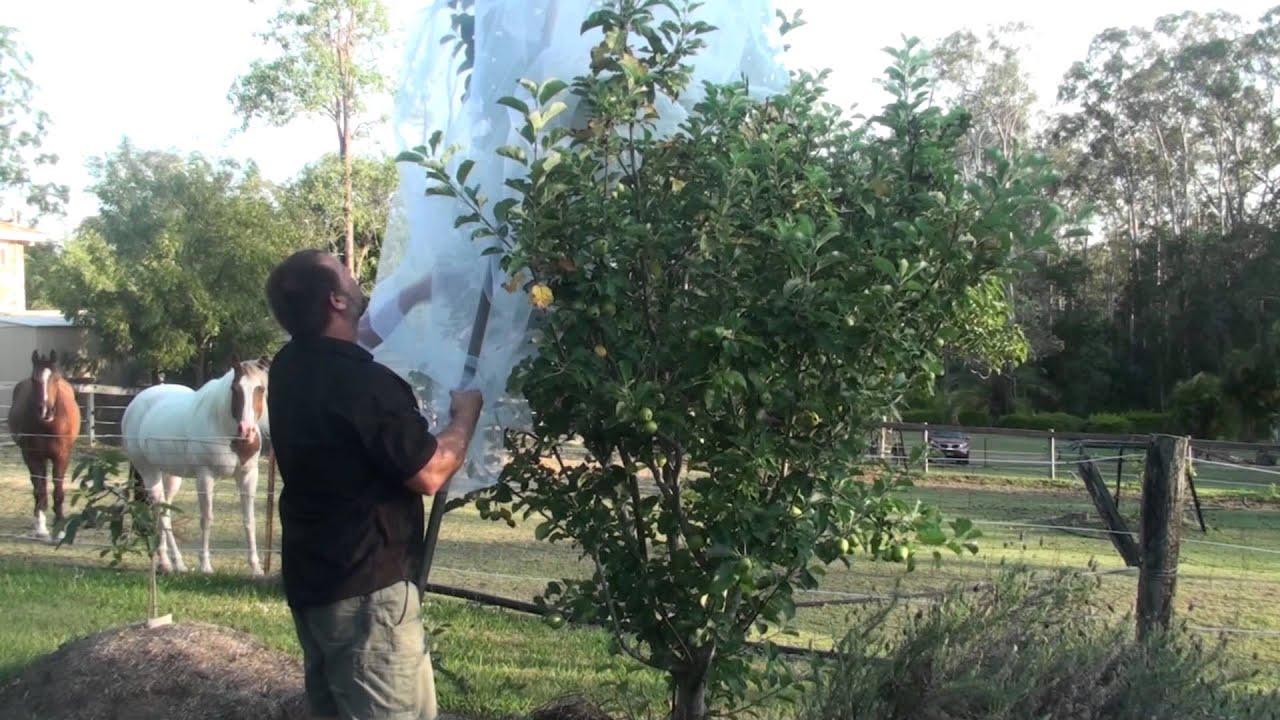 Full Apple Tree netting Demo Protect Against Fruit Fly ...