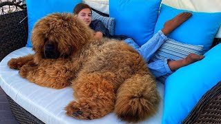 These Are 10 Coziest Dog Breeds