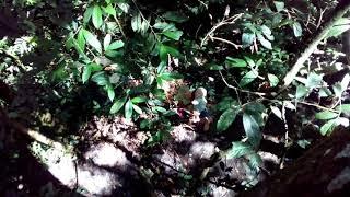 Ficus tree, tukan, птица носорог и другие