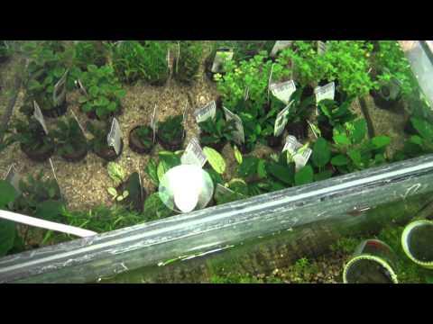 Aquarium Pflanzen Anlage