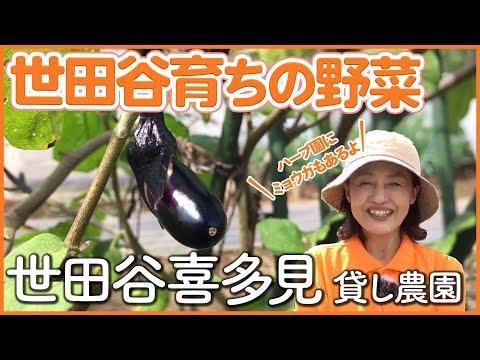 【栽培生活】世田谷喜多見のハーブ園やミョウガがある住宅地の貸し農園【シェア畑】