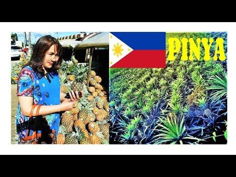 Exploring Pineapple (Pineapple Benefits & Uses) #Pinay Pinya